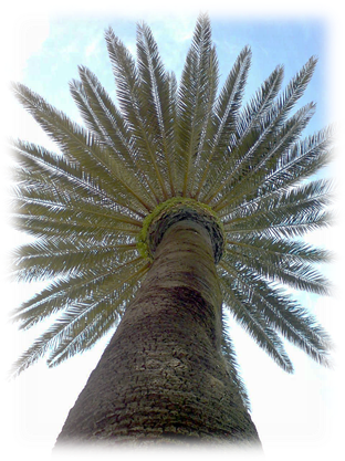Palm tree, Catalunya, Spain. Copyright ©2016 Trelawny Bond-Taylor